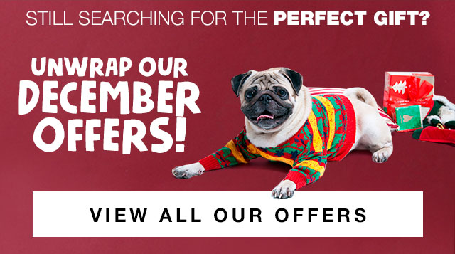 Unwrap Our Offers for the Perfect Gift