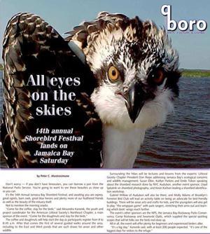 Shorebird Festival celebrates avian life on the bay