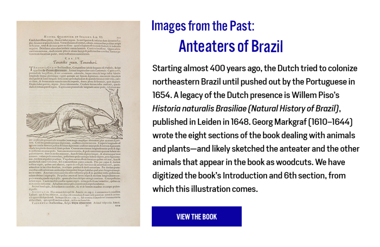 Image from the Past: Anteaters of Brazil