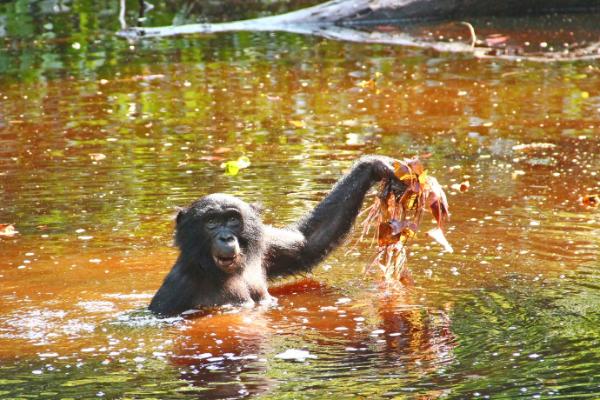 Bonobo Diet
