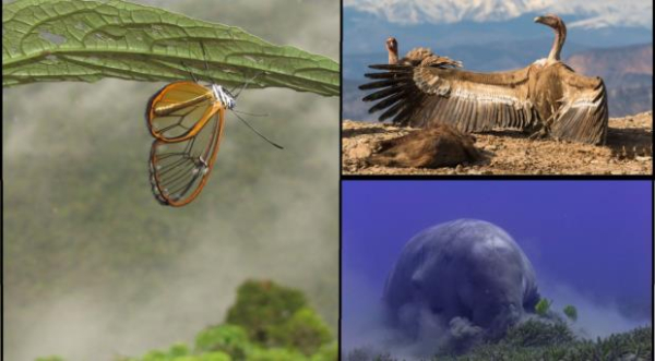 Ecology image competition