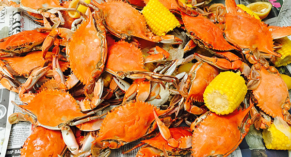 Seafood Festivals You Must Taste