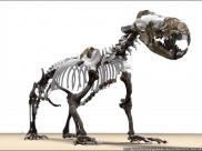 Prehistoryczna foka przypomina?a wydr?