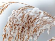 Ro?liny wra?liwe na zimno. Jak chroni? ro?liny przed przymrozkami?