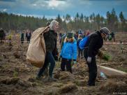 Rusza akcja nasadzania drzew w Nadle?nictwie Lipusz