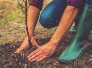 Przegl?darka internetowa, która sadzi drzewa