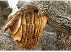 Ukraina. Miod 6 zl/kg. Pozyskujemy ziolomiody, propolis, wosk. Gospodarstwa agroturystyczne, pszczel