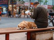 Zakaz wyprowadzania psów na spacer? Takie rzeczy tylko w Chinach!