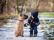 Psy zmniejszaj? ryzyko schizofrenii