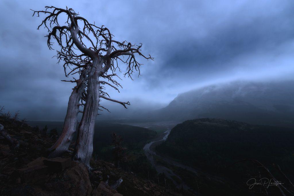 Tree Stormy
