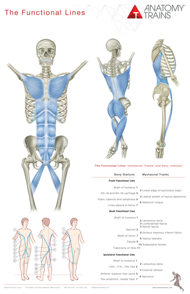 Anatomy Trains 3rd edition poster