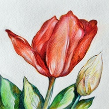 Austen Pinkerton - tulip, 2020
