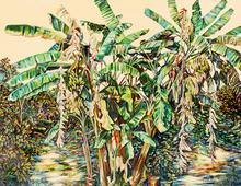 Caren Keyser - banana trees, 2001