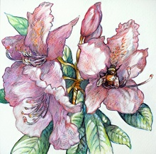 Austen Pinkerton - rhododendron and bumble bee, 2020