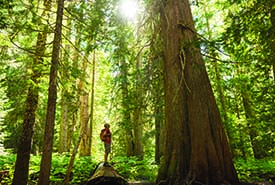 Big trees (photo credit: stock image)