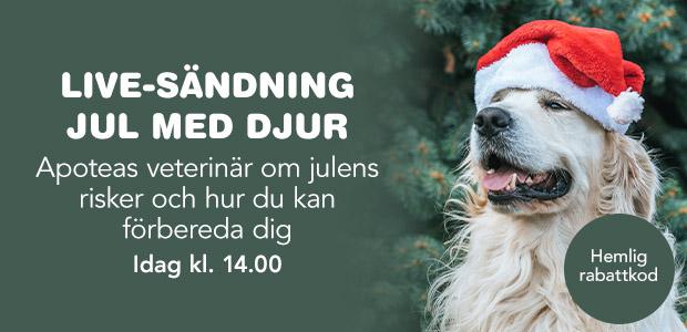 Livesändning med tema jul med djur!