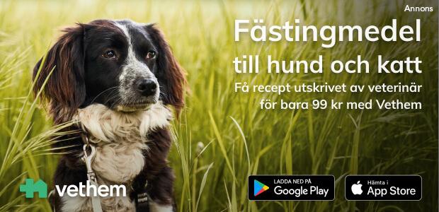 Få hjälp med dina djur hos Vethem. Ladda ned deras app.
