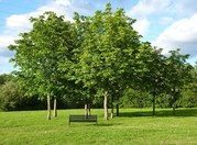 Tree_planting_600