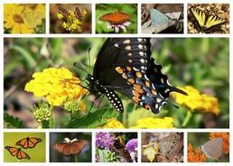 DSP butterflies
