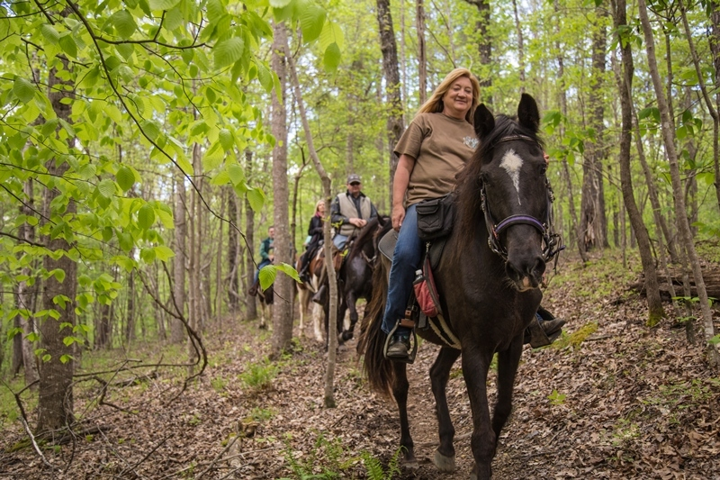 Horse on trails