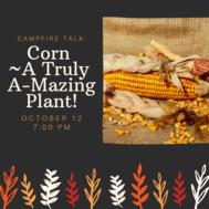 Corn- A Truly Amazing Plant
