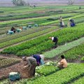 Iran''s Agrifood Exports Earn Over $330m in 1 Month