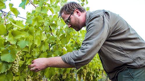 Why Napa Valley Needs to Start Talking About Climate Change