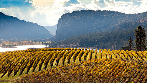 Why U.S. Buyers Can't Get Wine from British Columbia
