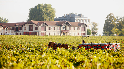 The Challenges of Going Organic and Biodynamic in Bordeaux