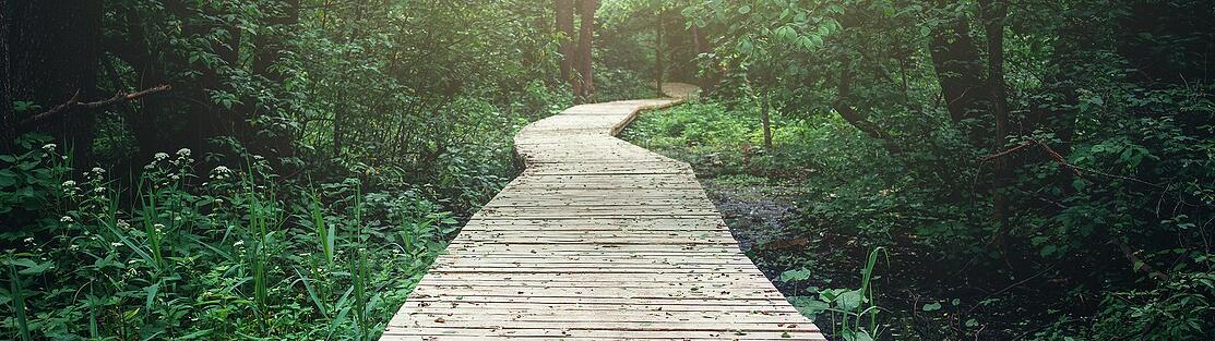 Wooden pathway leading on to represent adopting a journey mindset to move forward.